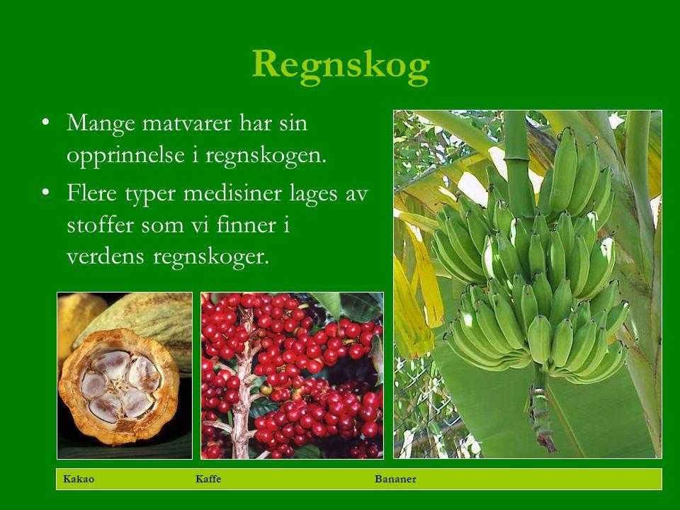 Regnskog Mange matvarer har sin opprinnelse i regnskogen. Flere typer medisiner lages av stoffer som vi finner i verdens regnskoger. Kakao Kaffe Banan