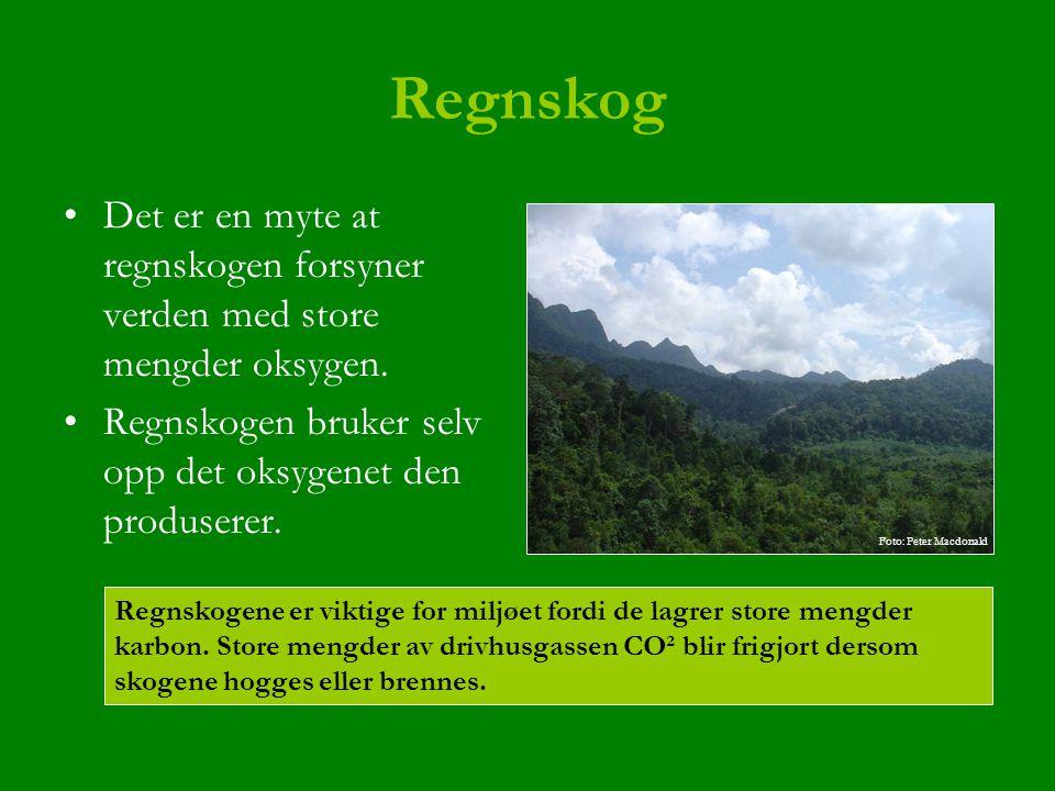 Regnskog Det er en myte at regnskogen forsyner verden med store mengder oksygen. Regnskogen bruker selv opp det oksygenet den produserer. Regnskogene