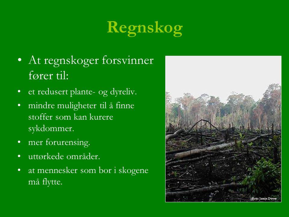 Regnskog At regnskoger forsvinner fører til: et redusert plante- og dyreliv. mindre muligheter til å finne stoffer som kan kurere sykdommer. mer forur