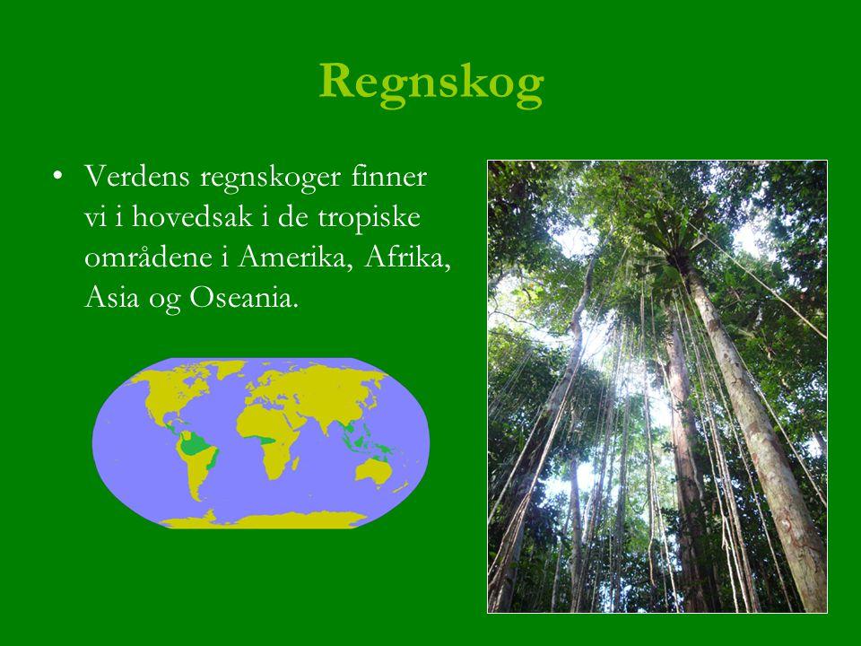 Regnskog Verdens regnskoger finner vi i hovedsak i de tropiske områdene i Amerika, Afrika, Asia og Oseania.
