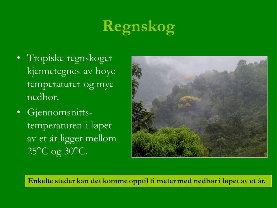 Regnskog Tropiske regnskoger kjennetegnes av høye temperaturer og mye nedbør. Gjennomsnitts- temperaturen i løpet av et år ligger mellom 25°C og 30°C.