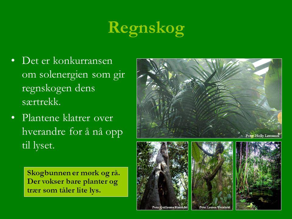 Regnskog Det er konkurransen om solenergien som gir regnskogen dens særtrekk. Plantene klatrer over hverandre for å nå opp til lyset. Skogbunnen er mø