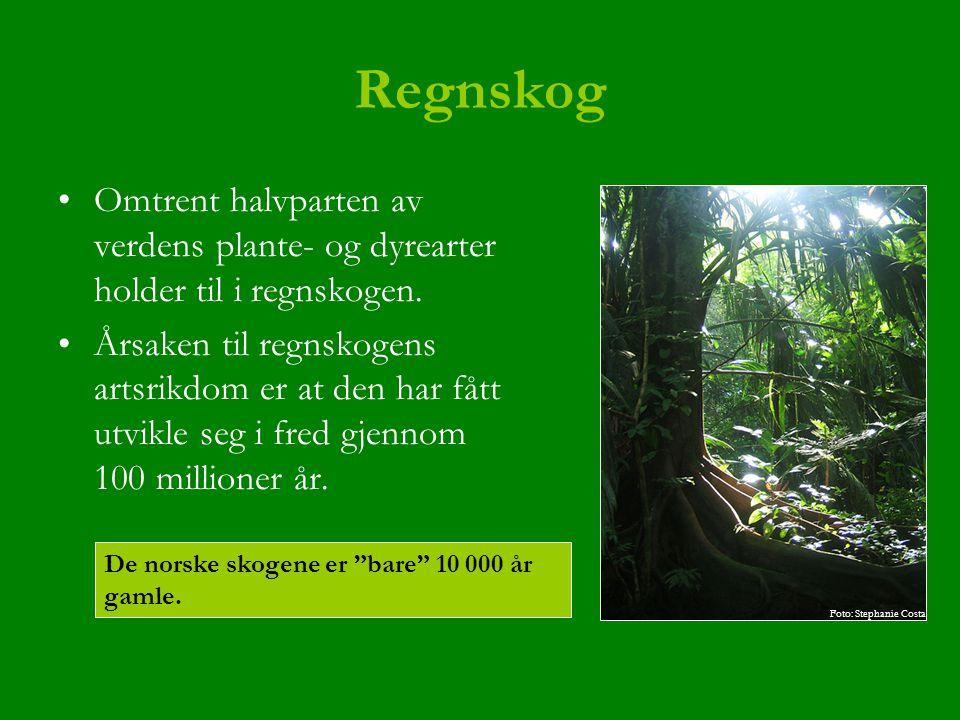 Regnskog Omtrent halvparten av verdens plante- og dyrearter holder til i regnskogen. Årsaken til regnskogens artsrikdom er at den har fått utvikle seg