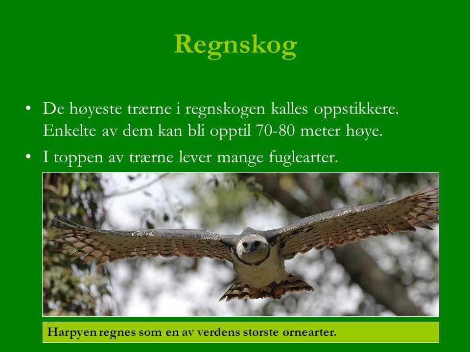 Regnskog De høyeste trærne i regnskogen kalles oppstikkere. Enkelte av dem kan bli opptil 70-80 meter høye. I toppen av trærne lever mange fuglearter.