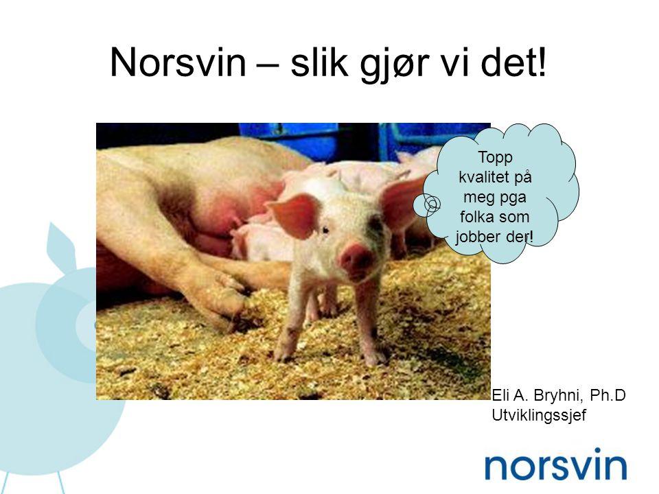 Mangfold - fortrinnsvis snakke om likestilling i Norsvin: Dyr, gener og harde fakta!