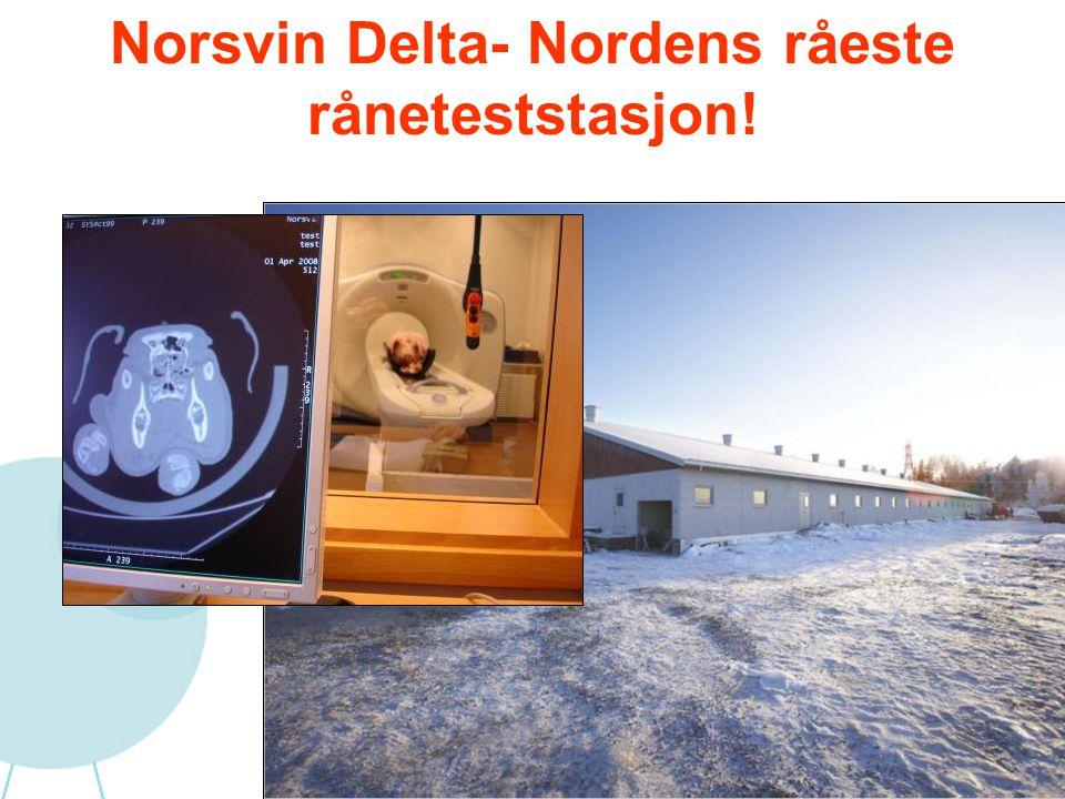 Norsvin Delta- Nordens råeste råneteststasjon!