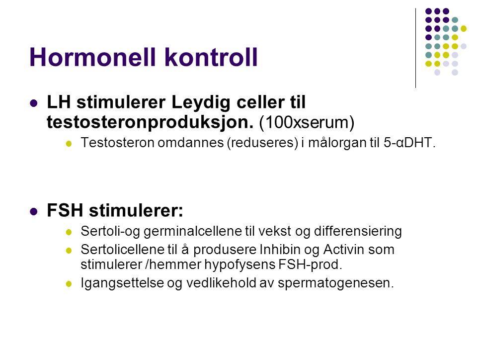 Hormonell kontroll LH stimulerer Leydig celler til testosteronproduksjon. (100xserum) Testosteron omdannes (reduseres) i målorgan til 5-αDHT. FSH stim