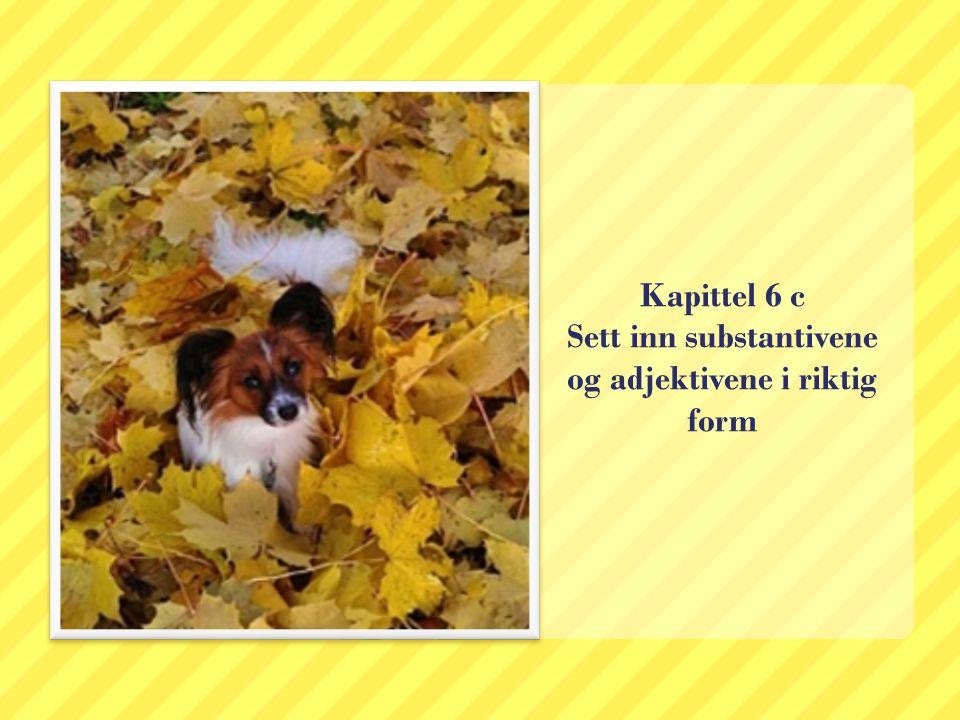 Kapittel 6 c Sett inn substantivene og adjektivene i riktig form