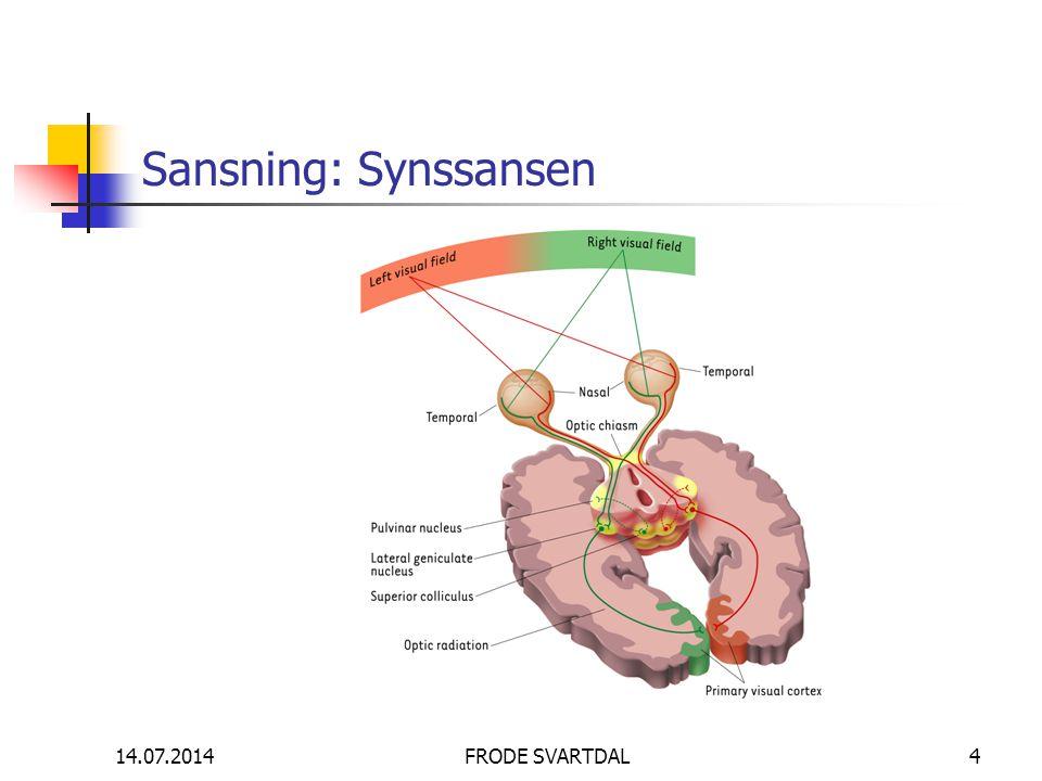 14.07.2014FRODE SVARTDAL4 Sansning: Synssansen