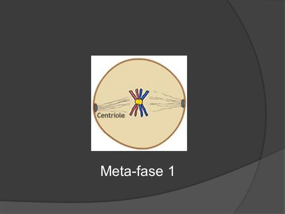Meta-fase 1