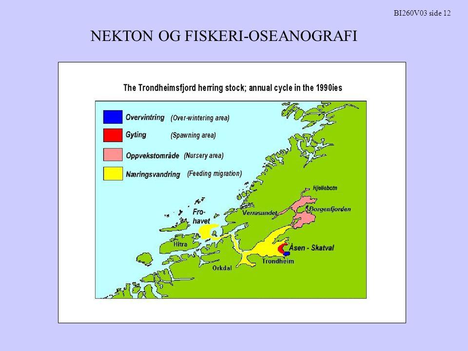 NEKTON OG FISKERI-OSEANOGRAFI BI260V03 side 12