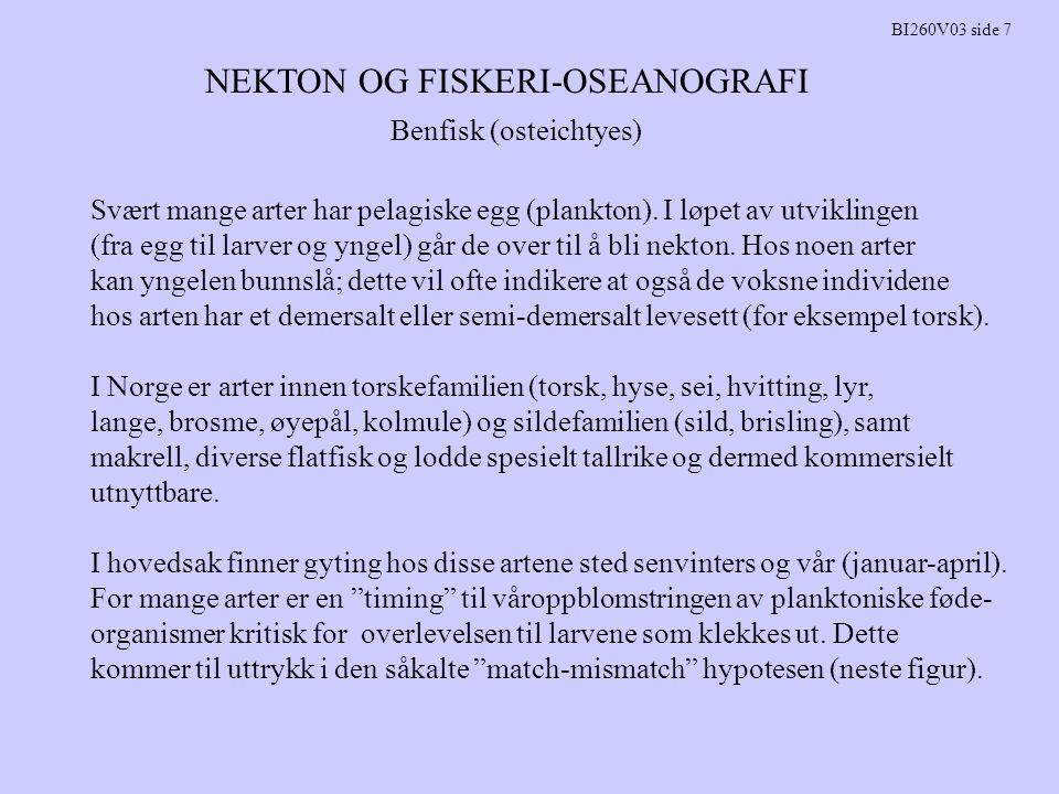 NEKTON OG FISKERI-OSEANOGRAFI BI260V03 side 7 Benfisk (osteichtyes) Svært mange arter har pelagiske egg (plankton). I løpet av utviklingen (fra egg ti