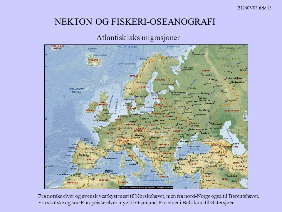 NEKTON OG FISKERI-OSEANOGRAFI BI260V03 side 15 Atlantisk laks migrasjoner Fra norske elver og svensk vestkyst mest til Norskehavet, men fra nord-Norge