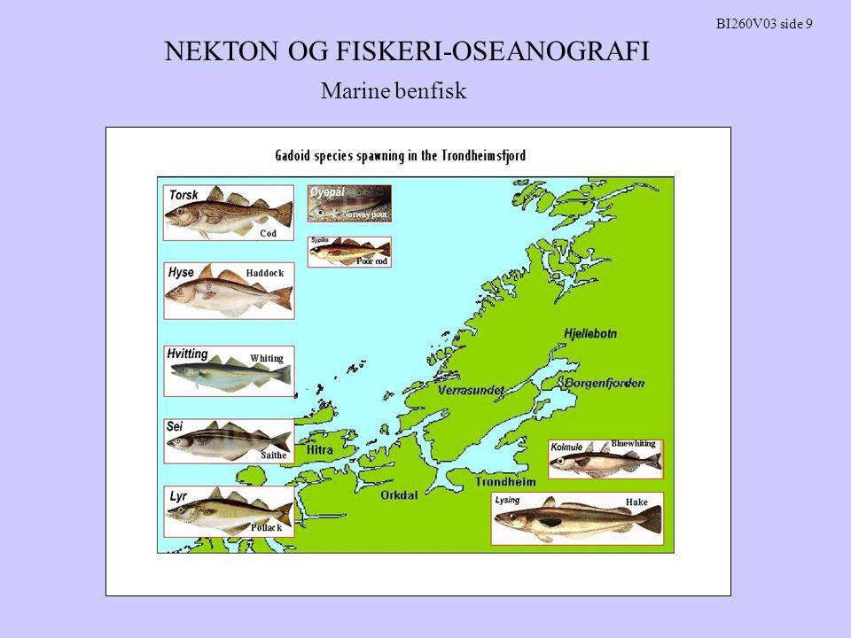 NEKTON OG FISKERI-OSEANOGRAFI BI260V03 side 10 Migrasjoner: Torsk i Trondheimsfjorden