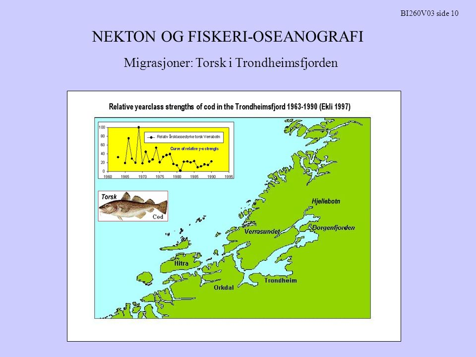 NEKTON OG FISKERI-OSEANOGRAFI BI260V03 side 11