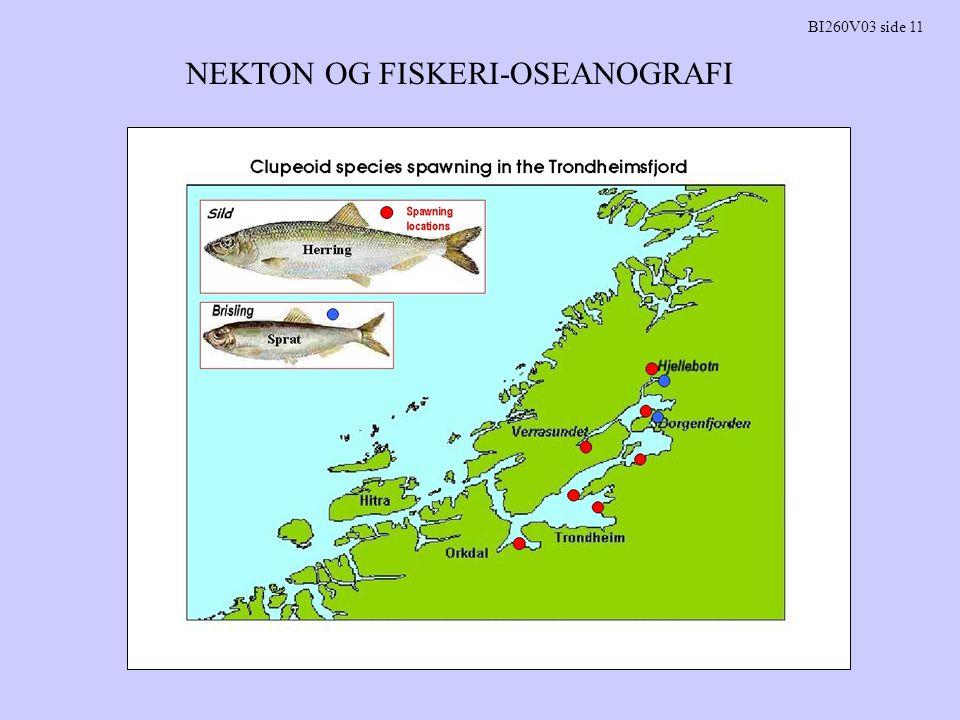NEKTON OG FISKERI-OSEANOGRAFI BI260V03 side 19