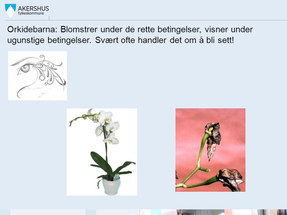 Orkidebarna: Blomstrer under de rette betingelser, visner under ugunstige betingelser. Svært ofte handler det om å bli sett!