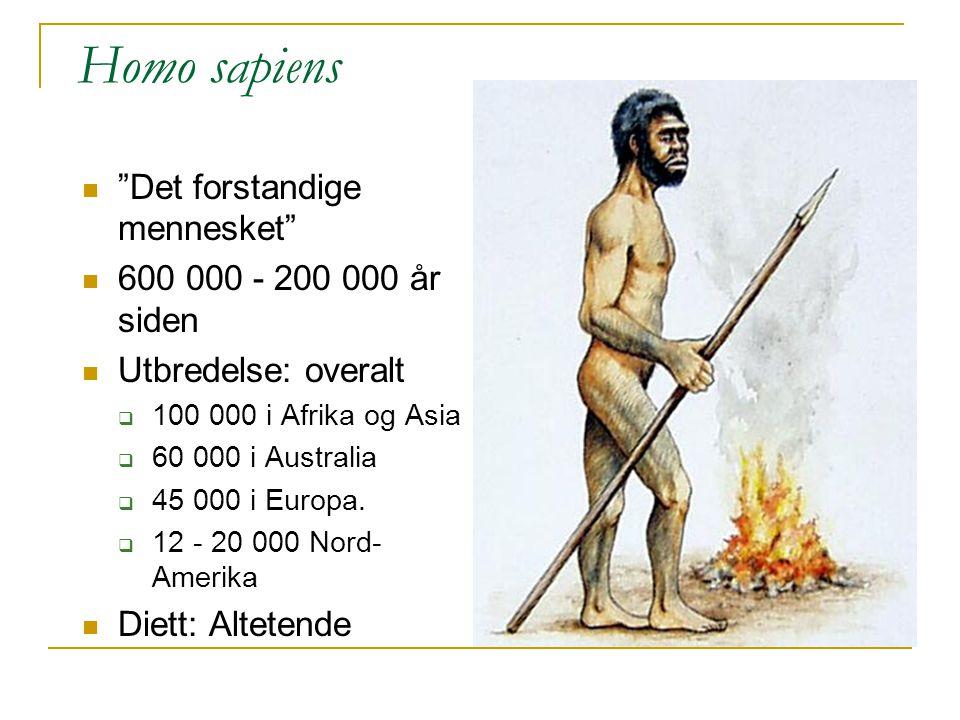 """Homo sapiens """"Det forstandige mennesket"""" 600 000 - 200 000 år siden Utbredelse: overalt  100 000 i Afrika og Asia  60 000 i Australia  45 000 i Eur"""