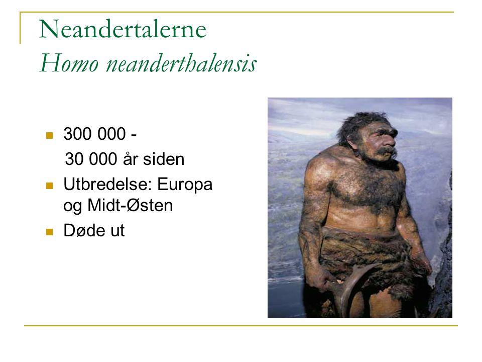 Neandertalerne Homo neanderthalensis 300 000 - 30 000 år siden Utbredelse: Europa og Midt-Østen Døde ut