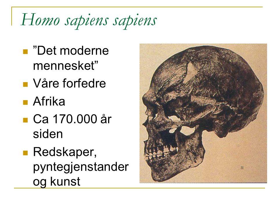 """""""Det moderne mennesket"""" Våre forfedre Afrika Ca 170.000 år siden Redskaper, pyntegjenstander og kunst Homo sapiens sapiens"""