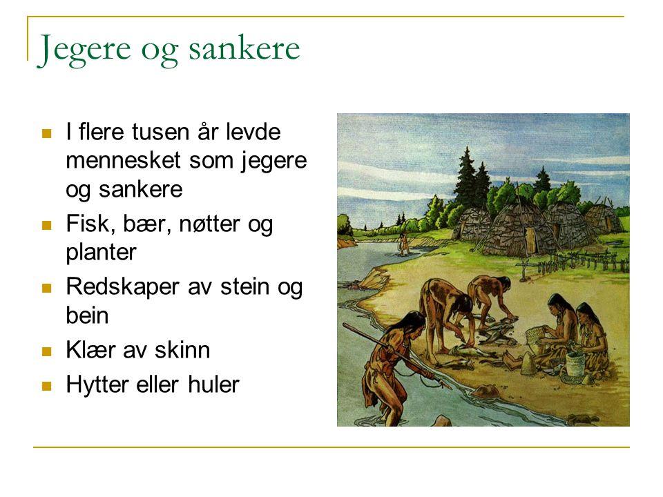Jegere og sankere I flere tusen år levde mennesket som jegere og sankere Fisk, bær, nøtter og planter Redskaper av stein og bein Klær av skinn Hytter