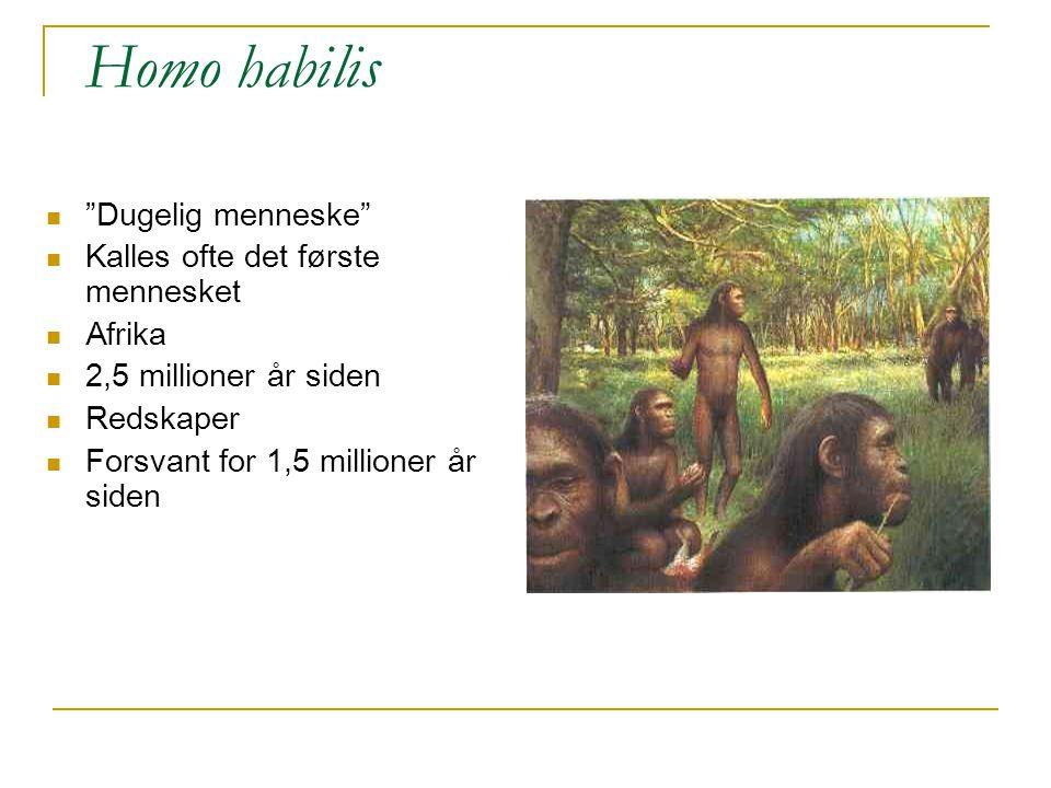 """Homo habilis """"Dugelig menneske"""" Kalles ofte det første mennesket Afrika 2,5 millioner år siden Redskaper Forsvant for 1,5 millioner år siden"""