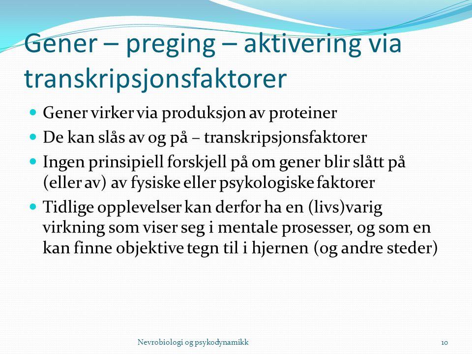 Gener – preging – aktivering via transkripsjonsfaktorer Gener virker via produksjon av proteiner De kan slås av og på – transkripsjonsfaktorer Ingen p