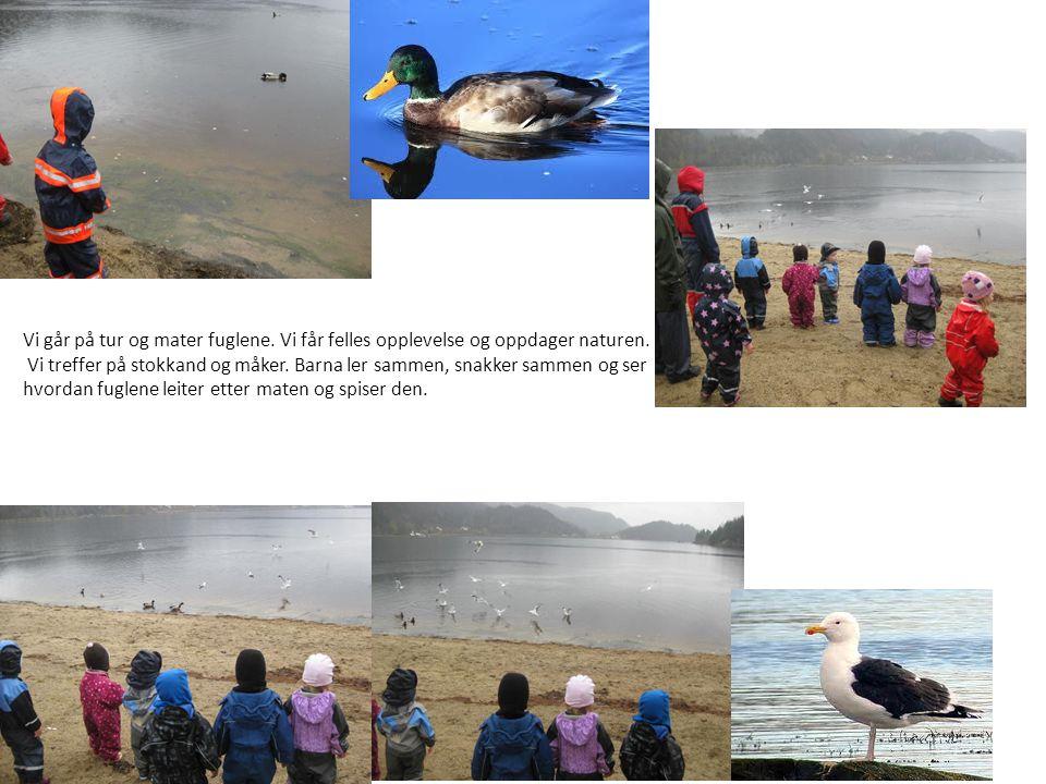 Vi går på tur og mater fuglene. Vi får felles opplevelse og oppdager naturen.