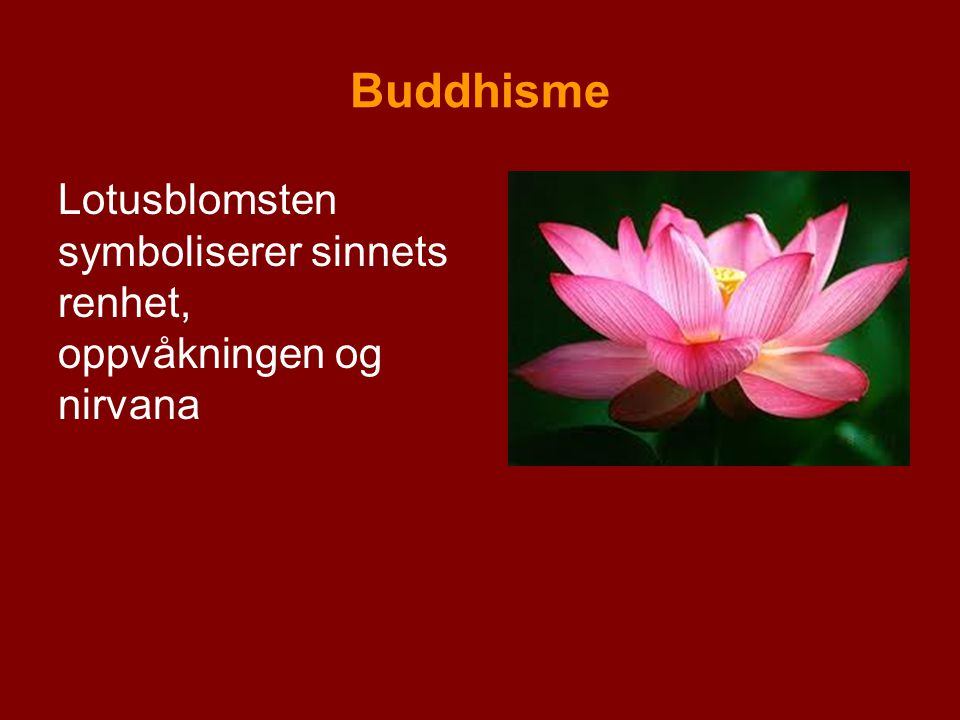 Buddhisme Lotusblomsten symboliserer sinnets renhet, oppvåkningen og nirvana
