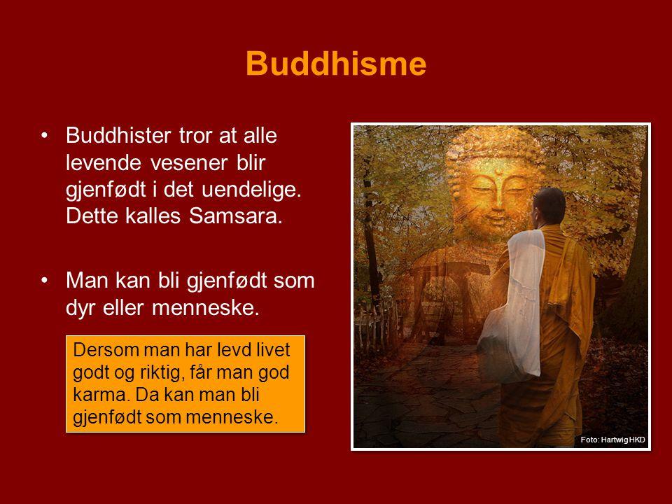 Buddhisme Buddhister tror at alle levende vesener blir gjenfødt i det uendelige. Dette kalles Samsara. Man kan bli gjenfødt som dyr eller menneske. De