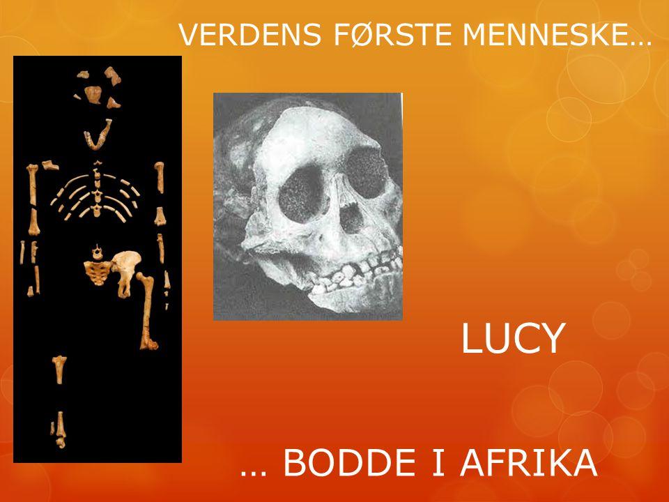 VERDENS FØRSTE MENNESKE… … BODDE I AFRIKA LUCY