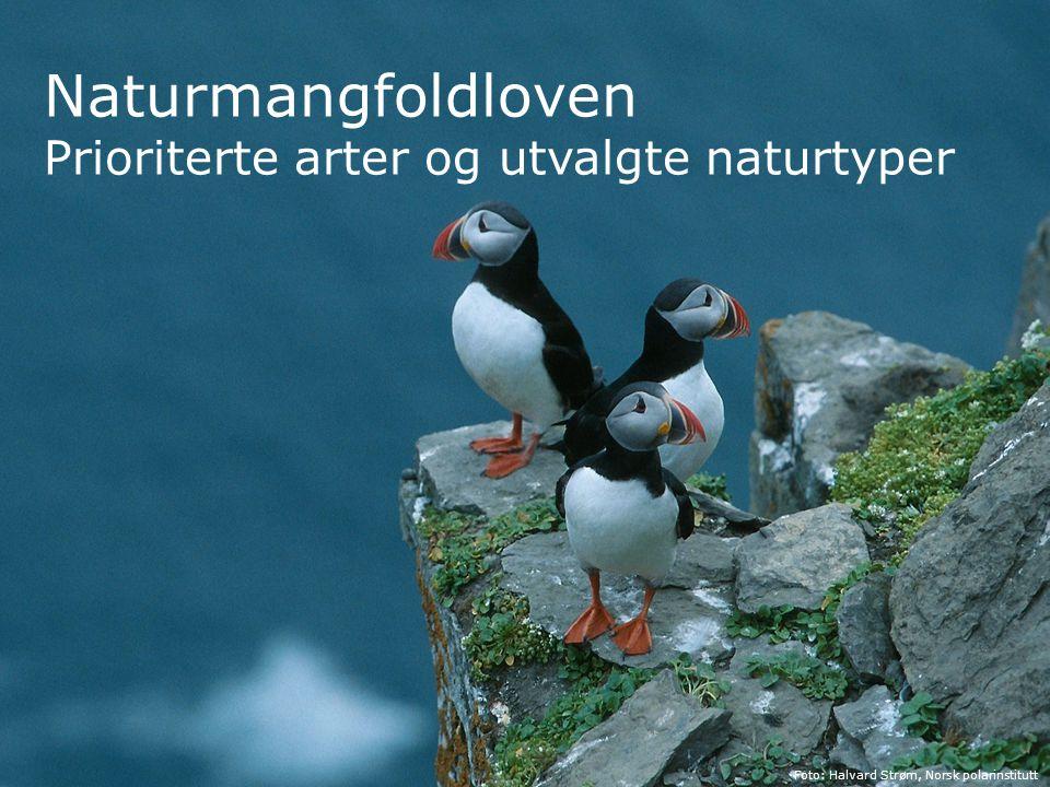 Naturmangfoldloven Prioriterte arter og utvalgte naturtyper Foto: Halvard Strøm, Norsk polarinstitutt