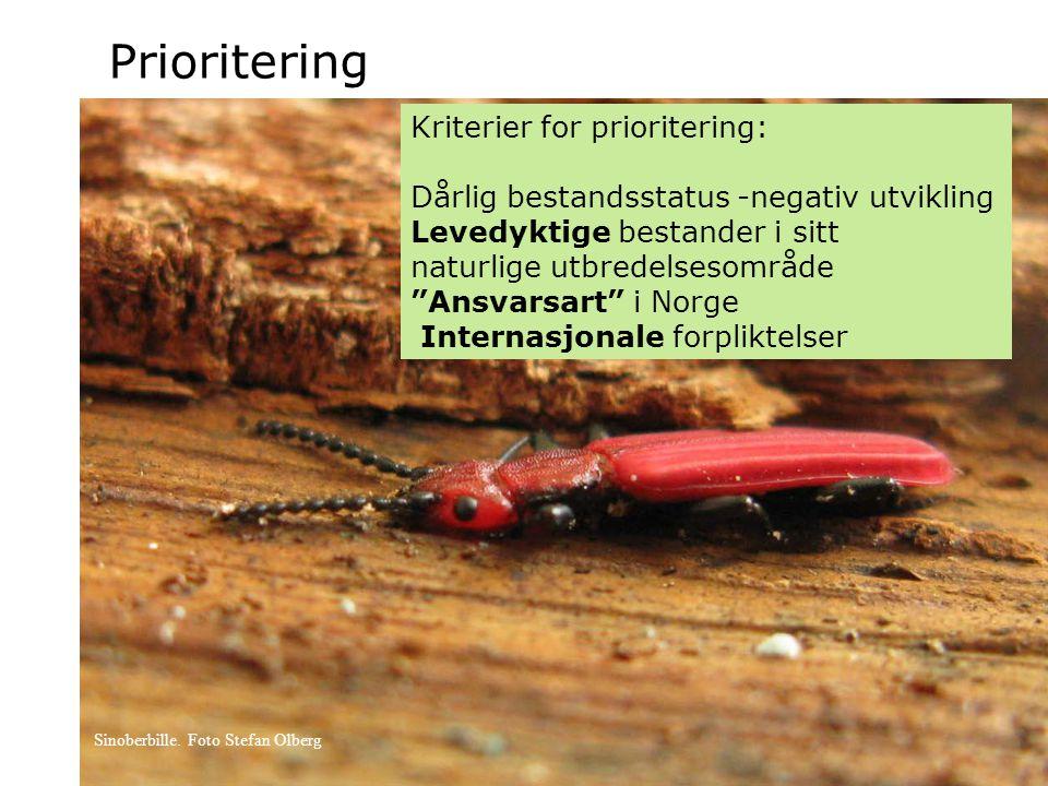 """Prioritering Kriterier for prioritering: Dårlig bestandsstatus -negativ utvikling Levedyktige bestander i sitt naturlige utbredelsesområde """"Ansvarsart"""