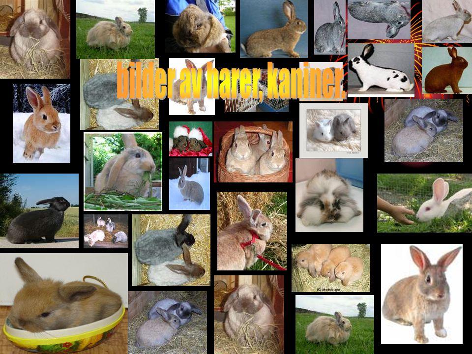 Min kanin Min kanin heter Perle og er 4 og et halvt år.