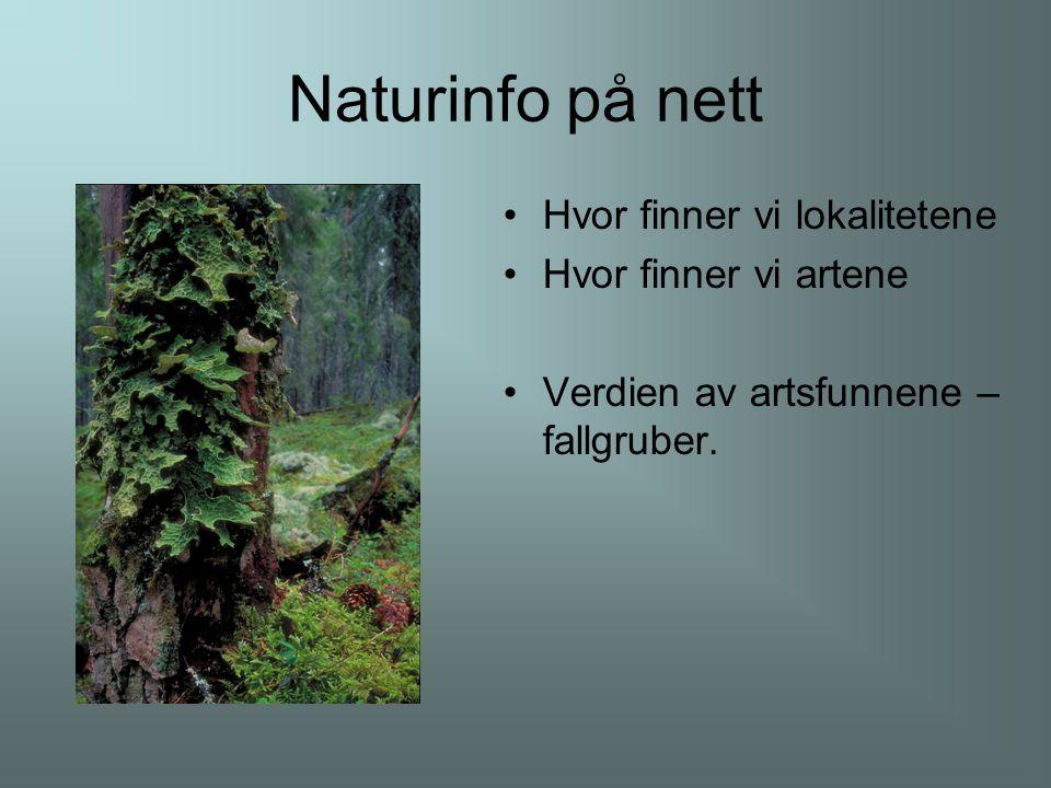 Naturinfo på nett Hvor finner vi lokalitetene Hvor finner vi artene Verdien av artsfunnene – fallgruber.