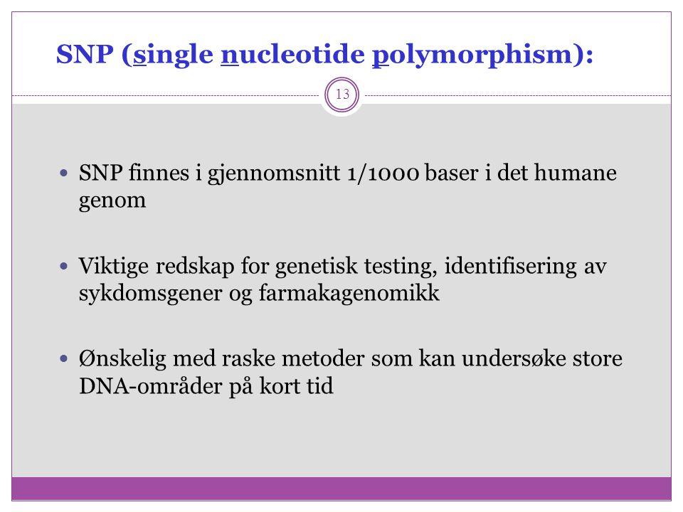 SNP (single nucleotide polymorphism): 13 SNP finnes i gjennomsnitt 1/1000 baser i det humane genom Viktige redskap for genetisk testing, identifiserin