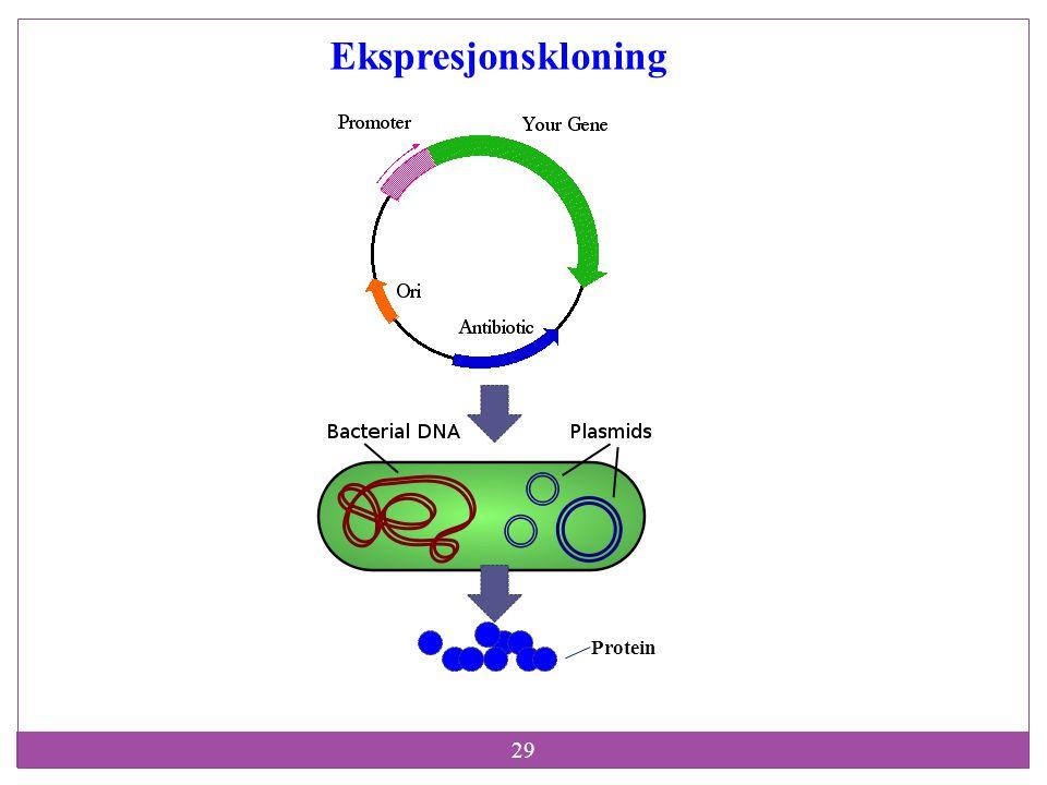 29 Protein Ekspresjonskloning
