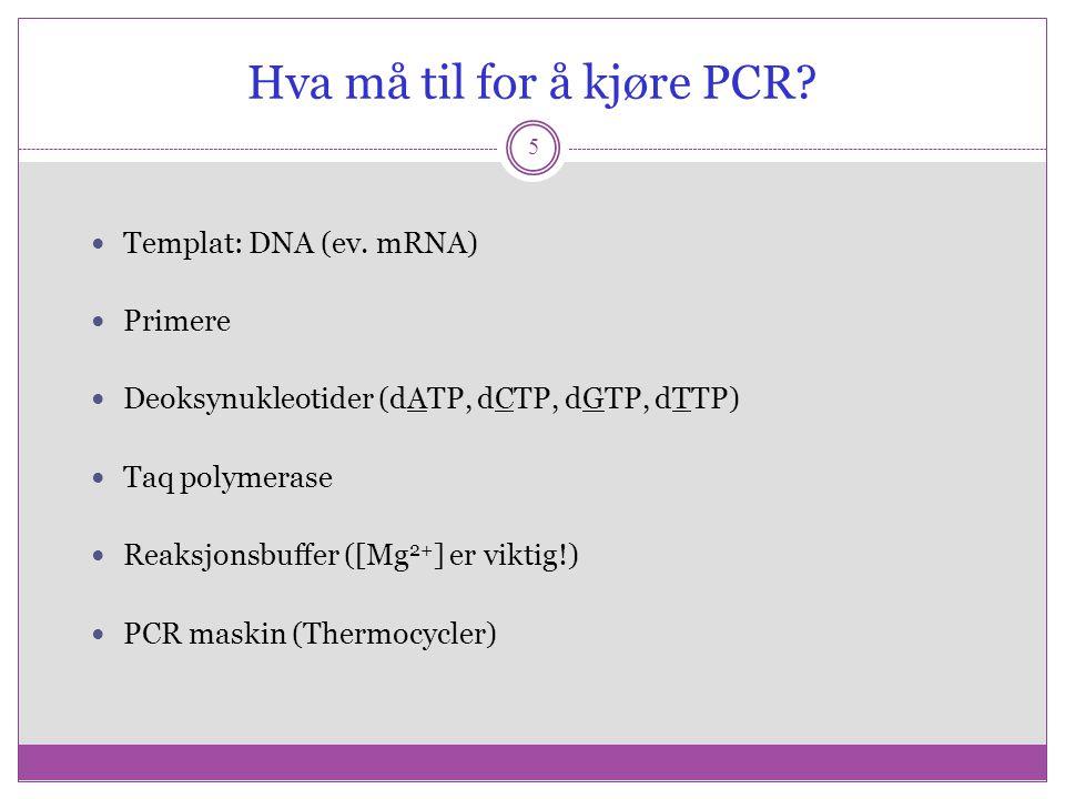 Hva må til for å kjøre PCR? 5 Templat: DNA (ev. mRNA) Primere Deoksynukleotider (dATP, dCTP, dGTP, dTTP) Taq polymerase Reaksjonsbuffer ([Mg 2+ ] er v