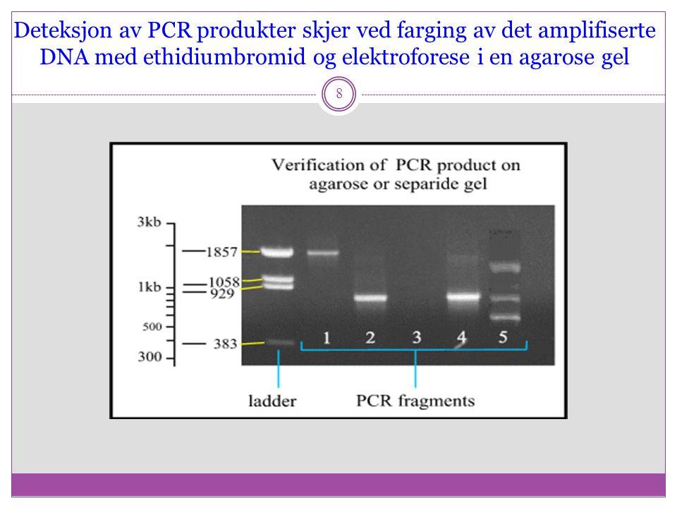 PCR er en eksponensiell amplifisering 9