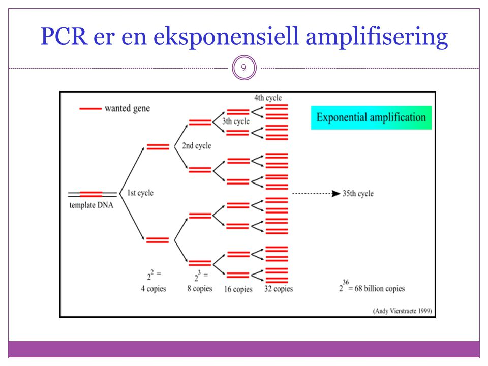40 Affymetrix, Applied Microarrays, Eppendorf En-kanal Måler absolutt nivå av genekspresjon Har samme probe på flere forskjellige steder på chipen Har prober med perfect match (PM) til genet og prober med en mismatch (MM) i midten av proben – kan korrigere for uspesifikk binding To-kanals Måler relativ forskjell i genekpresjon Foretrukket for målinger mellom forskjellige typer vev, tidspunkter etc Agilient, Eppendorf, Telechem