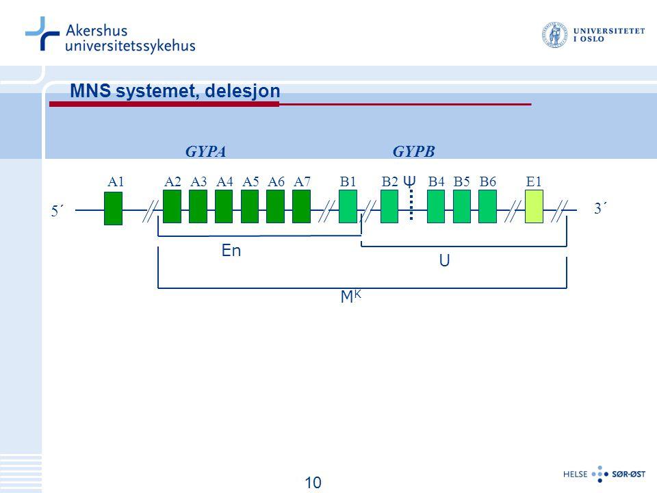 11 MNS systemet, delesjon A1A3A2A5A6A7A4B1B2E1B4B5B6 5´ 3´ GYPAGYPB Ψ MKMK En U 10