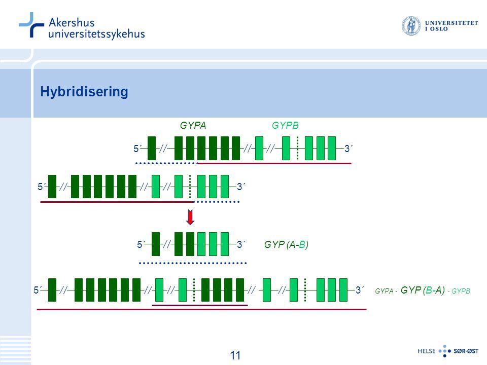 12 Hybridisering 5´ 3´ GYPAGYPB GYP (A-B) GYPA - GYP (B-A) - GYPB 11