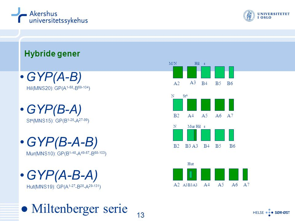 14 Hybride gener GYP(A-B) Hil(MNS20): GP(A 1-58 -B 59-104 ) GYP(B-A) St a (MNS15): GP(B 1-26 -A 27-99 ) GYP(B-A-B) Mur(MNS10): GP(B 1-48 -A 49-57 -B 58-103 ) GYP(A-B-A) Hut(MNS19): GP(A 1-27 -B 28 -A 29-131 ) A3 B6B5B4A2 M/NHils B2A4A5A7A6 NSt a B6B5B4B3 A3B2 sMur HilN ● Miltenberger serie A2 A3B3A3 A4A5A6A7 Hut 13