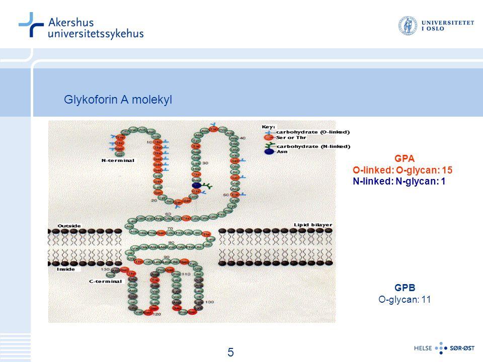 6 GPA O-linked: O-glycan: 15 N-linked: N-glycan: 1 GPB O-glycan: 11 5 Glykoforin A molekyl