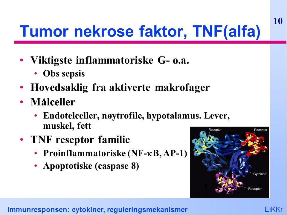 EiKKr Immunresponsen: cytokiner, reguleringsmekanismer 10 Tumor nekrose faktor, TNF(alfa) Viktigste inflammatoriske G- o.a. Obs sepsis Hovedsaklig fra