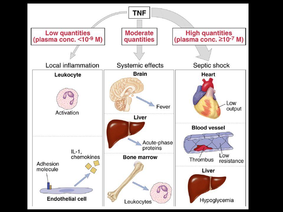EiKKr Immunresponsen: cytokiner, reguleringsmekanismer 11