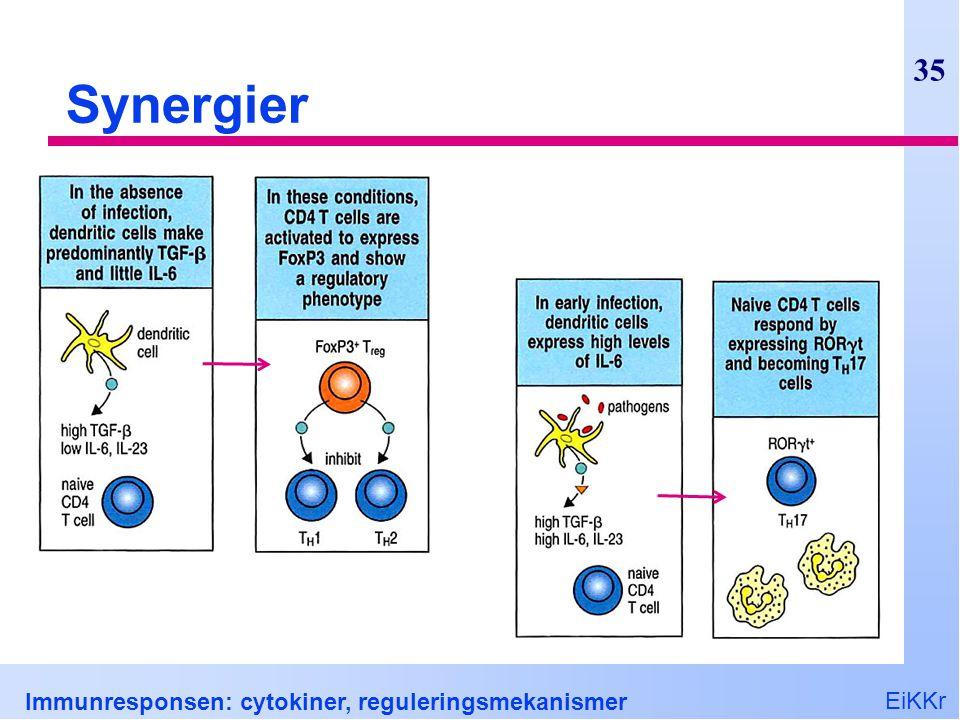 EiKKr Immunresponsen: cytokiner, reguleringsmekanismer 35 Synergier