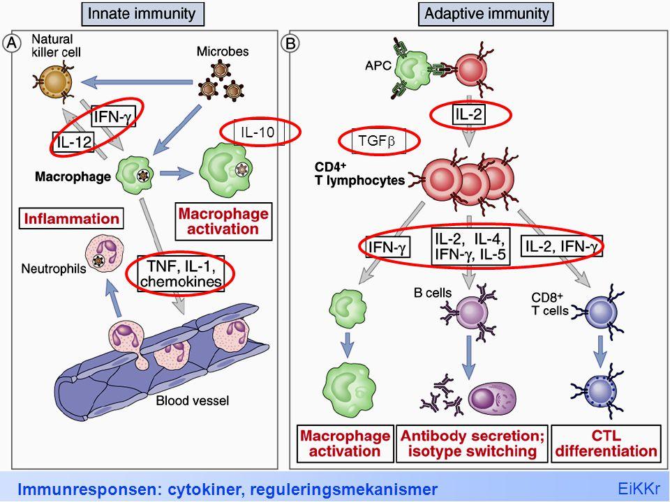 EiKKr Immunresponsen: cytokiner, reguleringsmekanismer 37 IL-10 TGF 