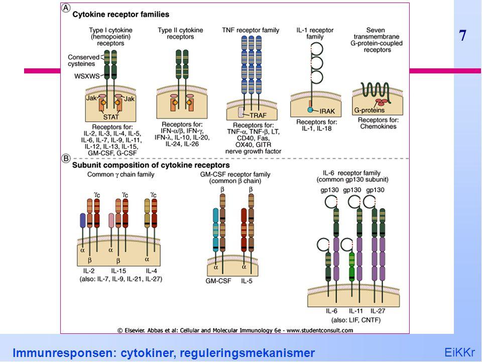 EiKKr Immunresponsen: cytokiner, reguleringsmekanismer 28 Interferon- , IFN  NK, CD4 Th1 og CD8 T celler Viktigste makrofagaktiverende cytokin Stimulerer MHC og stimulatorer APC Endotelceller Fremmer T H 1 differensiering B celle klassebytte til IgG1 og IgG3