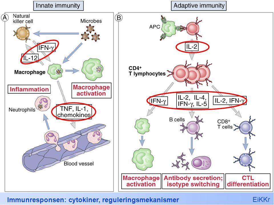 EiKKr Immunresponsen: cytokiner, reguleringsmekanismer 9 Innate cytokiner TNF IL-1 Kjemokiner IL-6 IL-10 IL-12 IL-15 IL-18, IL-23, IL-27